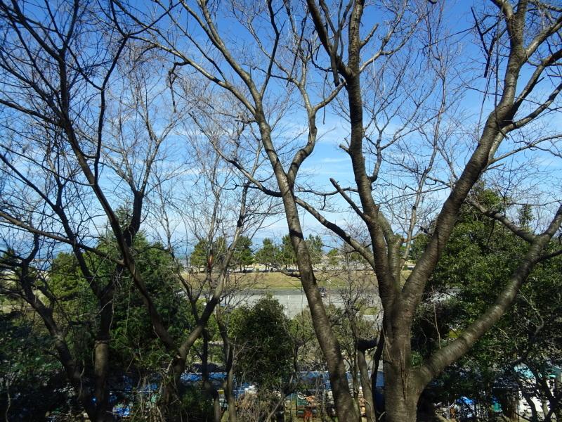 椿林の枯れ木伐採・・・うみべの森_c0108460_17580951.jpg
