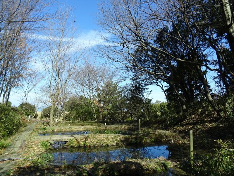 椿林の枯れ木伐採・・・うみべの森_c0108460_17584077.jpg