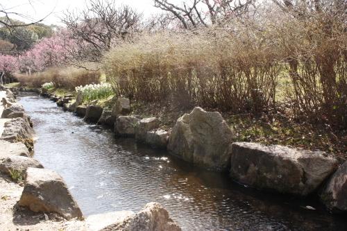 2月19日 万博公園の梅_a0023466_22185620.jpg