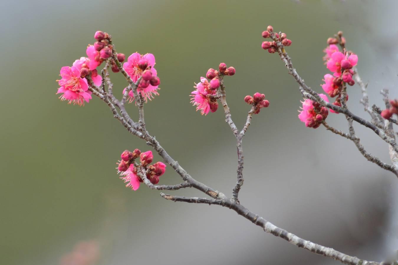 早春の花_b0223668_8522512.jpg