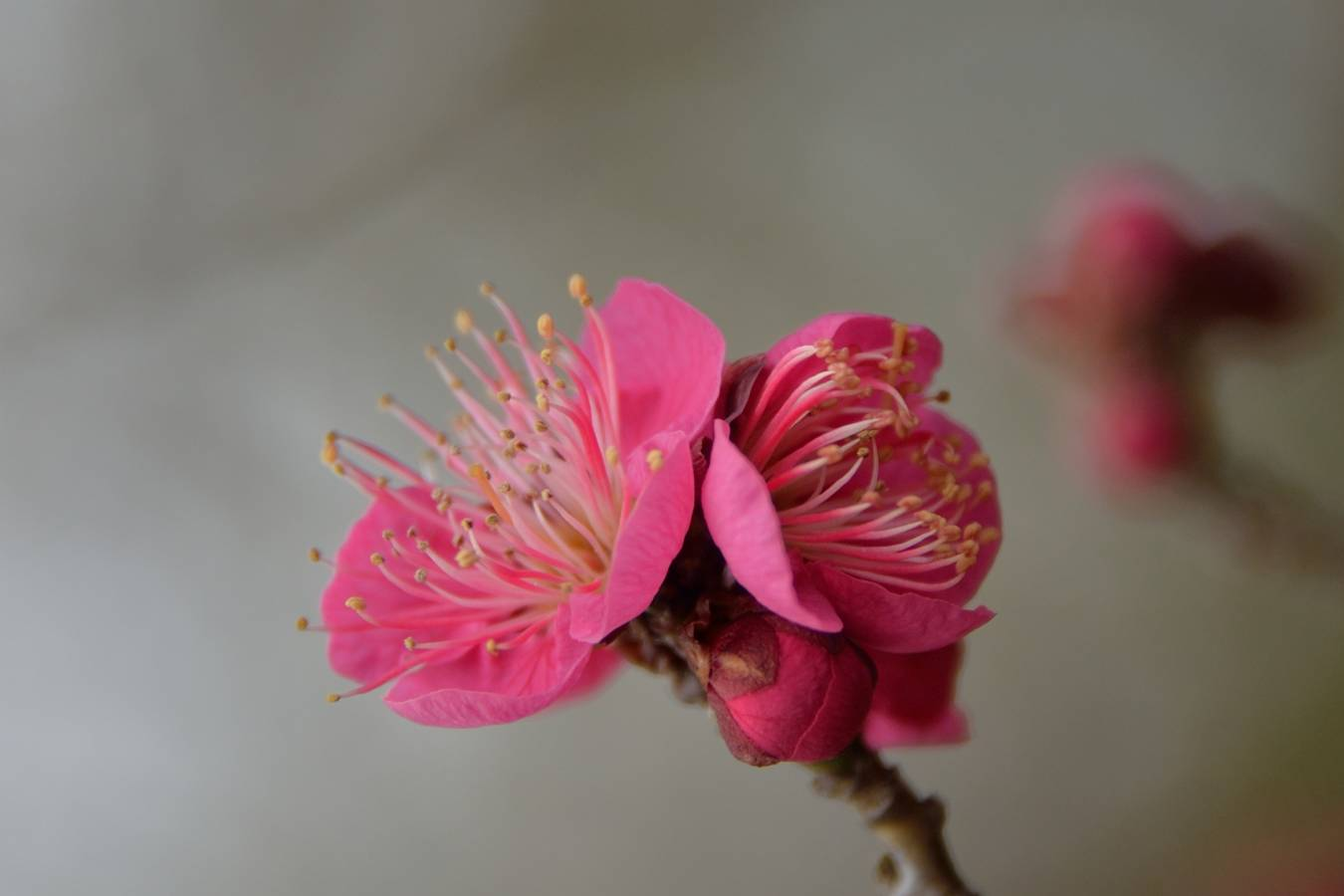 早春の花_b0223668_8524035.jpg