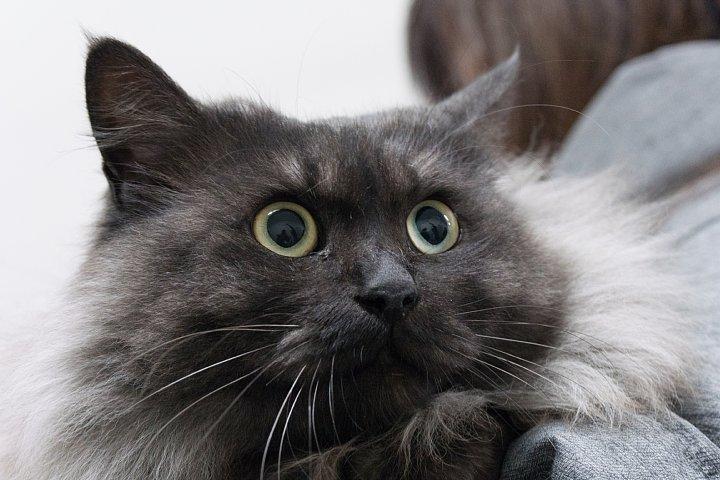 猫ちゃんの養子縁組_d0353489_20465934.jpg
