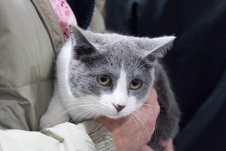 猫ちゃんの養子縁組_d0353489_20474672.jpg