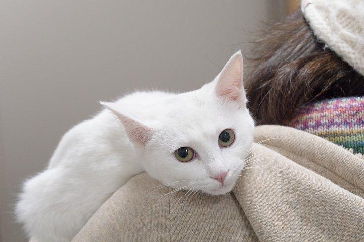猫ちゃんの養子縁組_d0353489_20483117.jpg