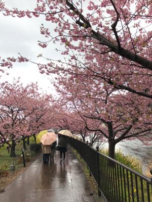 河津桜でお花見_b0107003_19580225.jpg