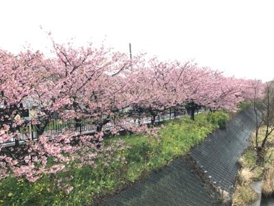 河津桜でお花見_b0107003_19580244.jpg