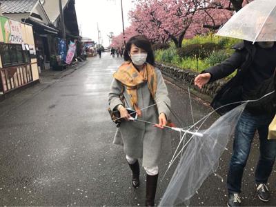 河津桜でお花見_b0107003_19580284.jpg