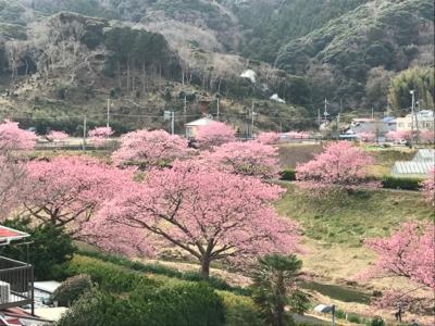 河津桜でお花見_b0107003_19580385.jpg