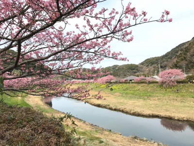 河津桜でお花見_b0107003_19580432.jpg