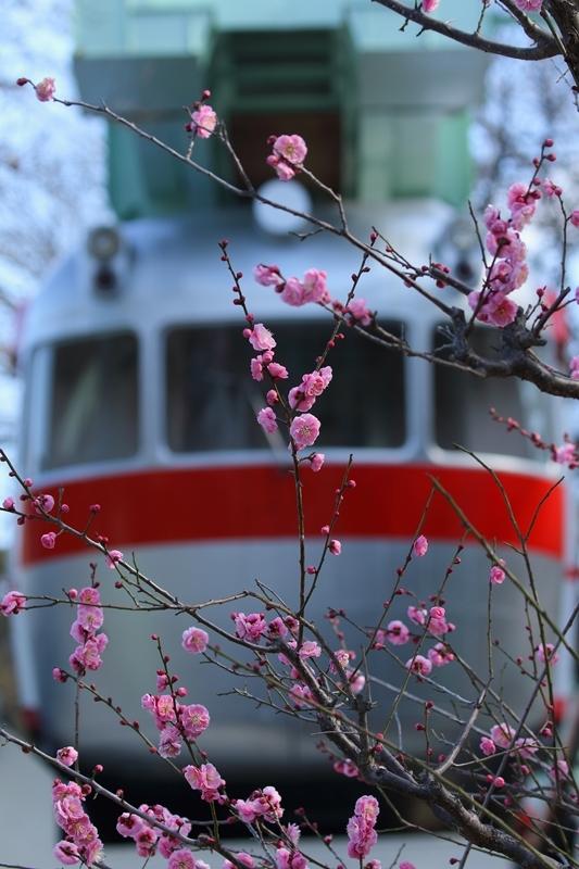 ピンクのネコ〇〇〇_e0364223_21573496.jpg