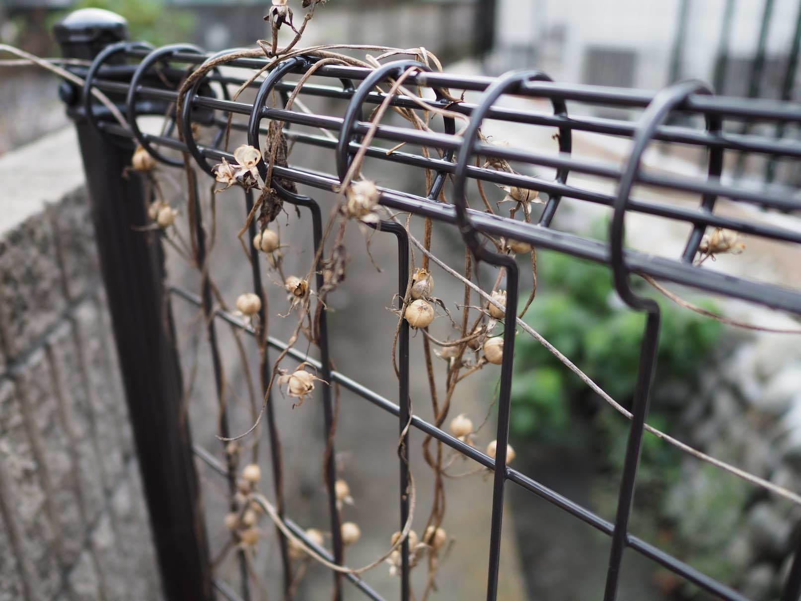 聖蹟桜ケ丘スナップ その35_b0360240_19421842.jpg