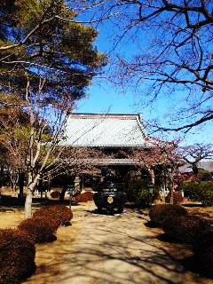 戦国散歩~豪徳寺_b0145843_20123603.jpg