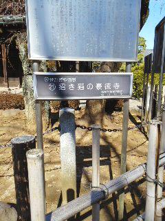 戦国散歩~豪徳寺_b0145843_20281902.jpg