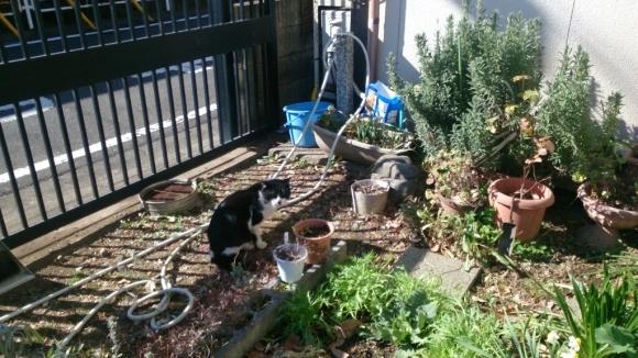 庭先の猫_d0116059_14360271.jpg