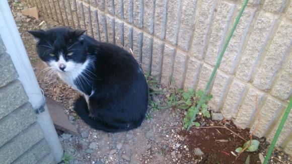 庭先の猫_d0116059_14360529.jpg