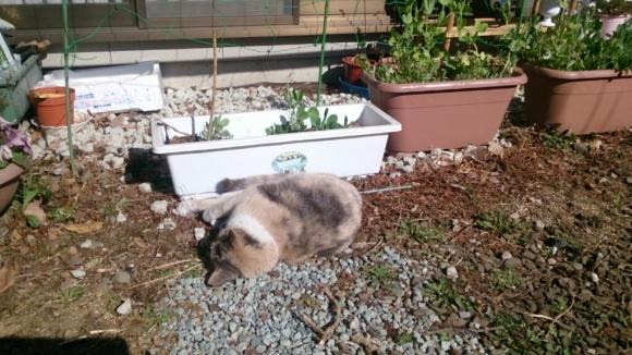 庭先の猫_d0116059_14360855.jpg
