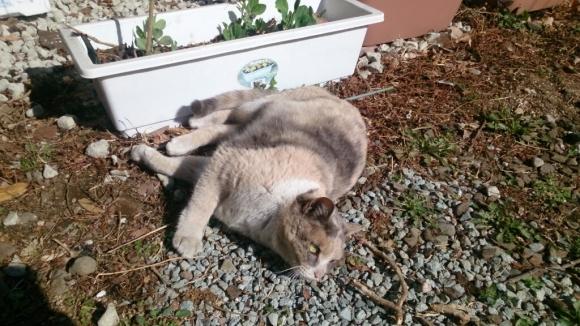 庭先の猫_d0116059_14361282.jpg