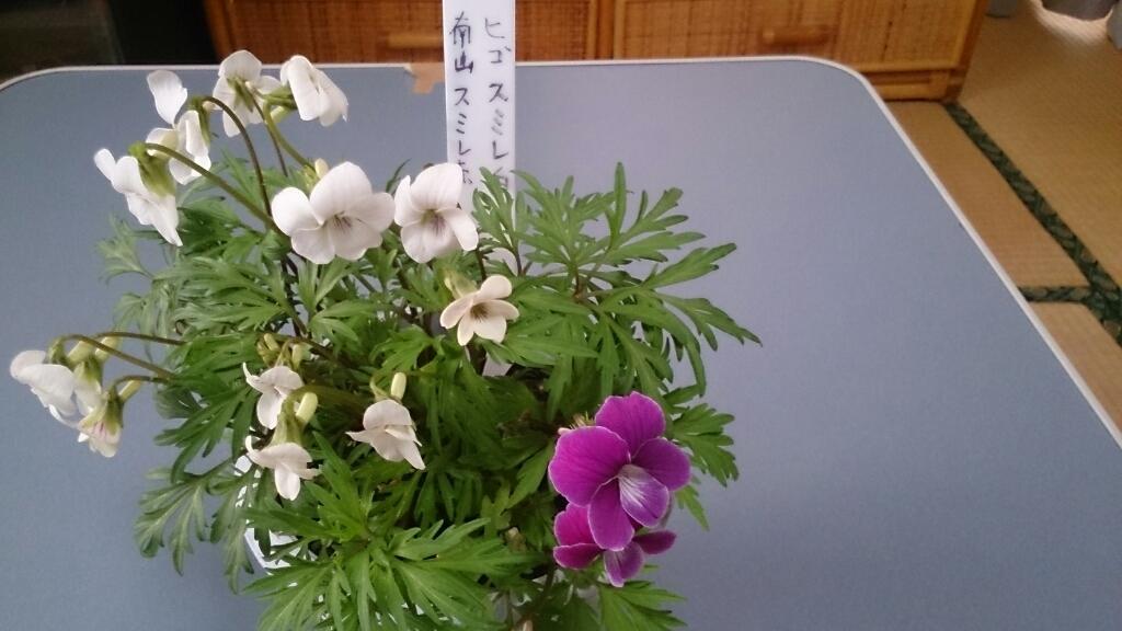 誕生日の花、その2。_d0116059_14511320.jpg