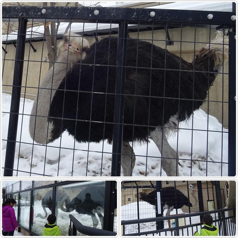 旭山動物園でランチ:雪の村_b0236665_11314268.jpg