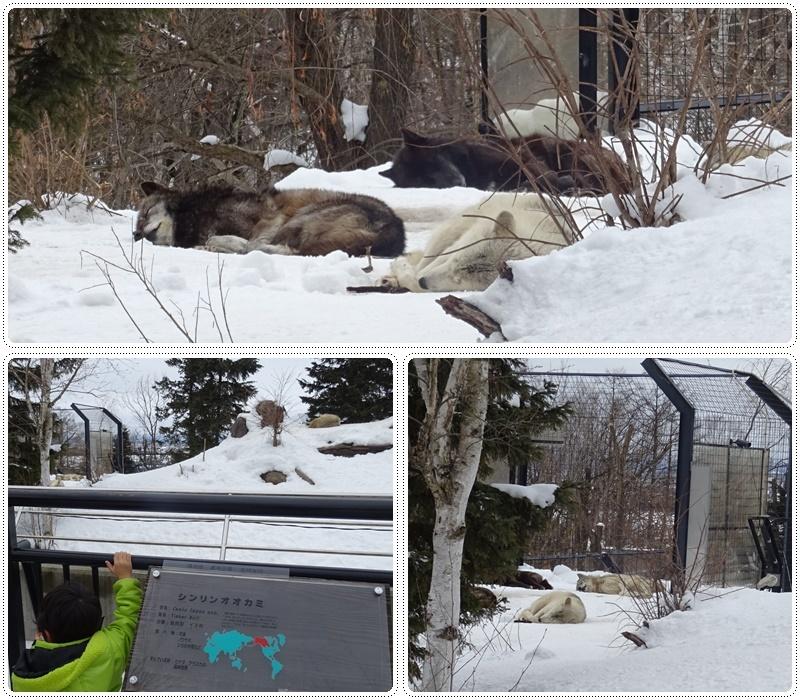 旭山動物園でランチ:雪の村_b0236665_11320878.jpg