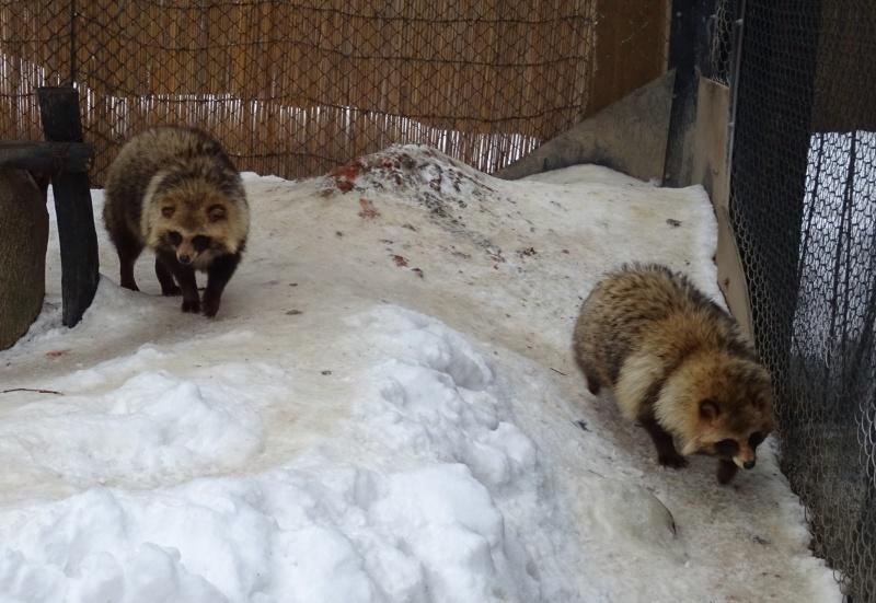 旭山動物園でランチ:雪の村_b0236665_11363979.jpg