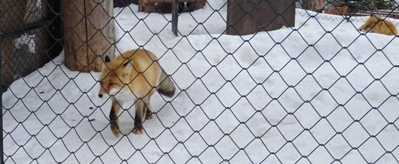 旭山動物園でランチ:雪の村_b0236665_11385960.jpg