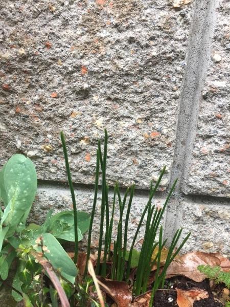 春の気配_e0232798_23342425.jpg