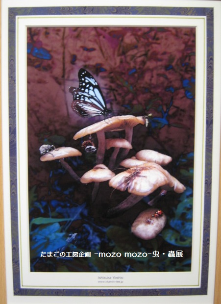 たまごの工房 企画展 「-mozo mozo-虫・蟲 展」 その7  _e0134502_20533194.jpg