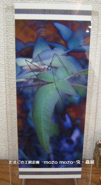 たまごの工房 企画展 「-mozo mozo-虫・蟲 展」 その7  _e0134502_20584445.jpg