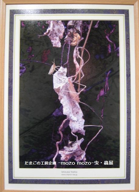 たまごの工房 企画展 「-mozo mozo-虫・蟲 展」 その7  _e0134502_20591365.jpg