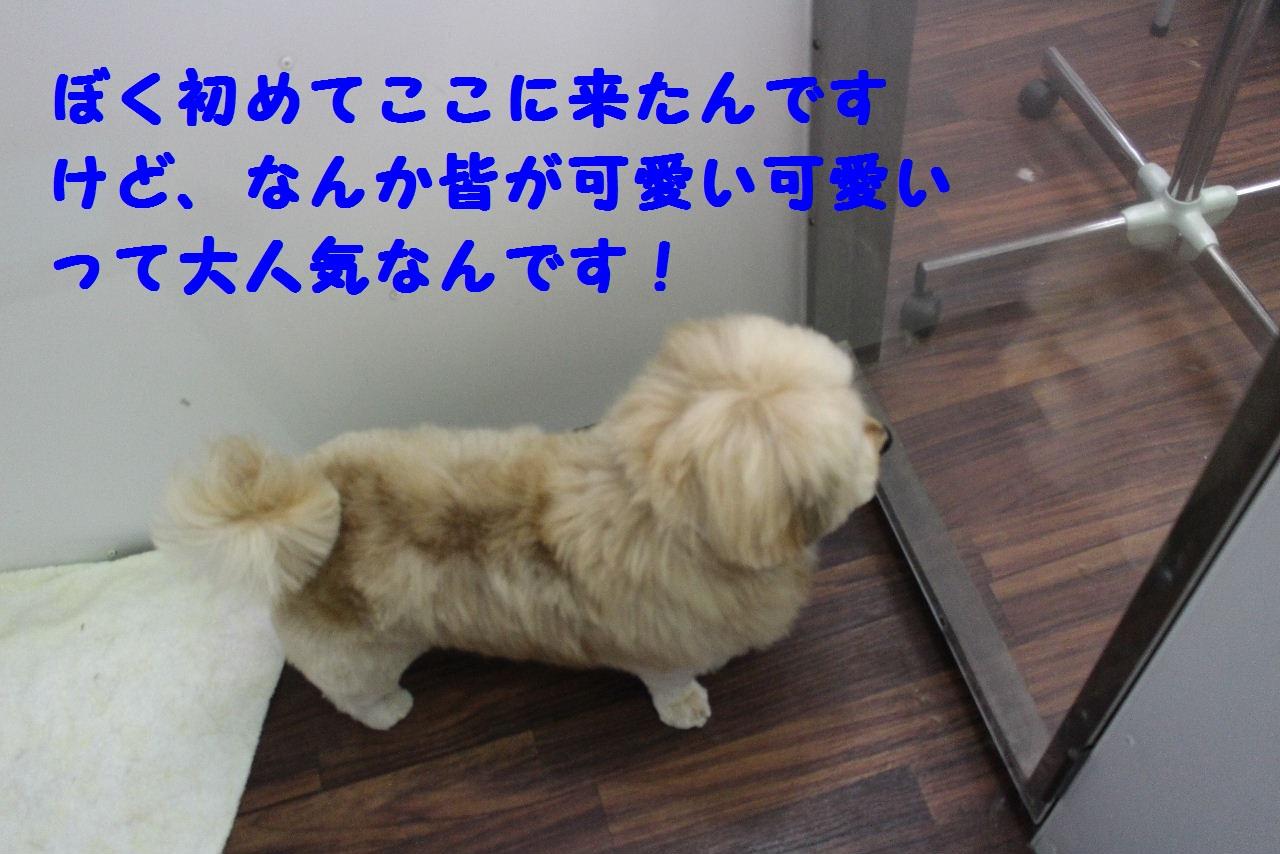 b0130018_8351387.jpg