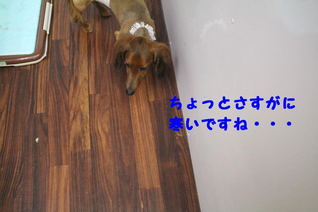 b0130018_8511810.jpg
