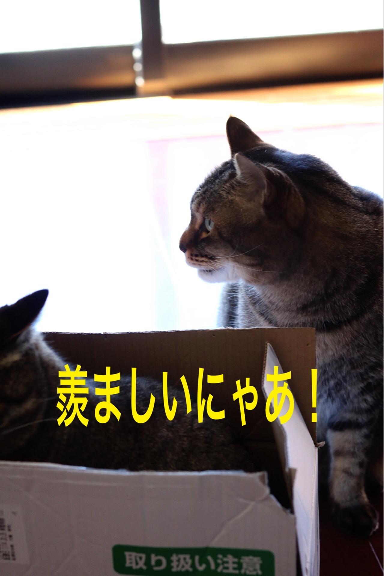 にゃんこ劇場「とらお君の憂鬱」_c0366722_21362604.jpg