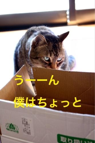にゃんこ劇場「とらお君の憂鬱」_c0366722_21364007.jpg