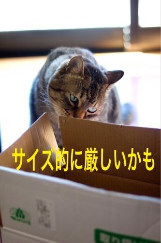 にゃんこ劇場「とらお君の憂鬱」_c0366722_21365011.jpg