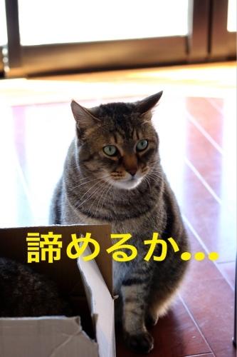 にゃんこ劇場「とらお君の憂鬱」_c0366722_21370273.jpg