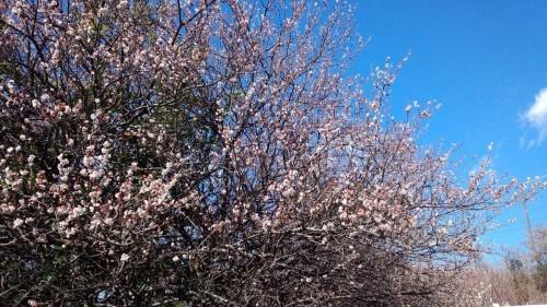 春の目覚め_f0129627_18013095.jpg