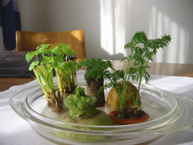 御礼と野菜ワールド_e0155231_15364787.jpg
