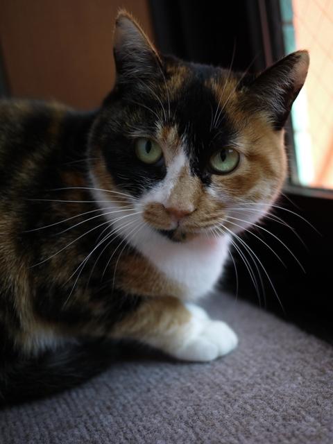 猫のお留守番 ごまちゃん編。_a0143140_21384752.jpg