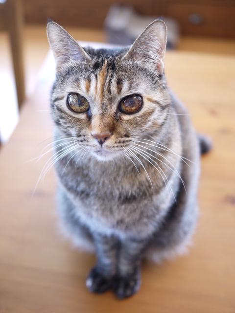 猫のお留守番 ワサビちゃん天ちゃん麦くん茶くん編。_a0143140_21494774.jpg