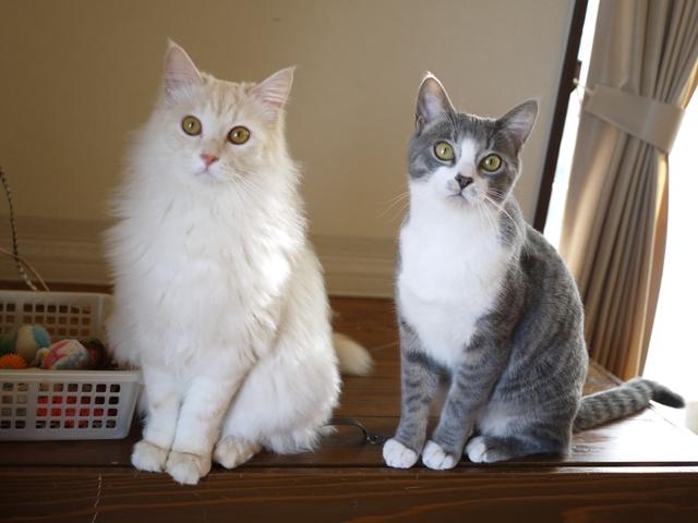 猫のお留守番 ワサビちゃん天ちゃん麦くん茶くん編。_a0143140_21502694.jpg