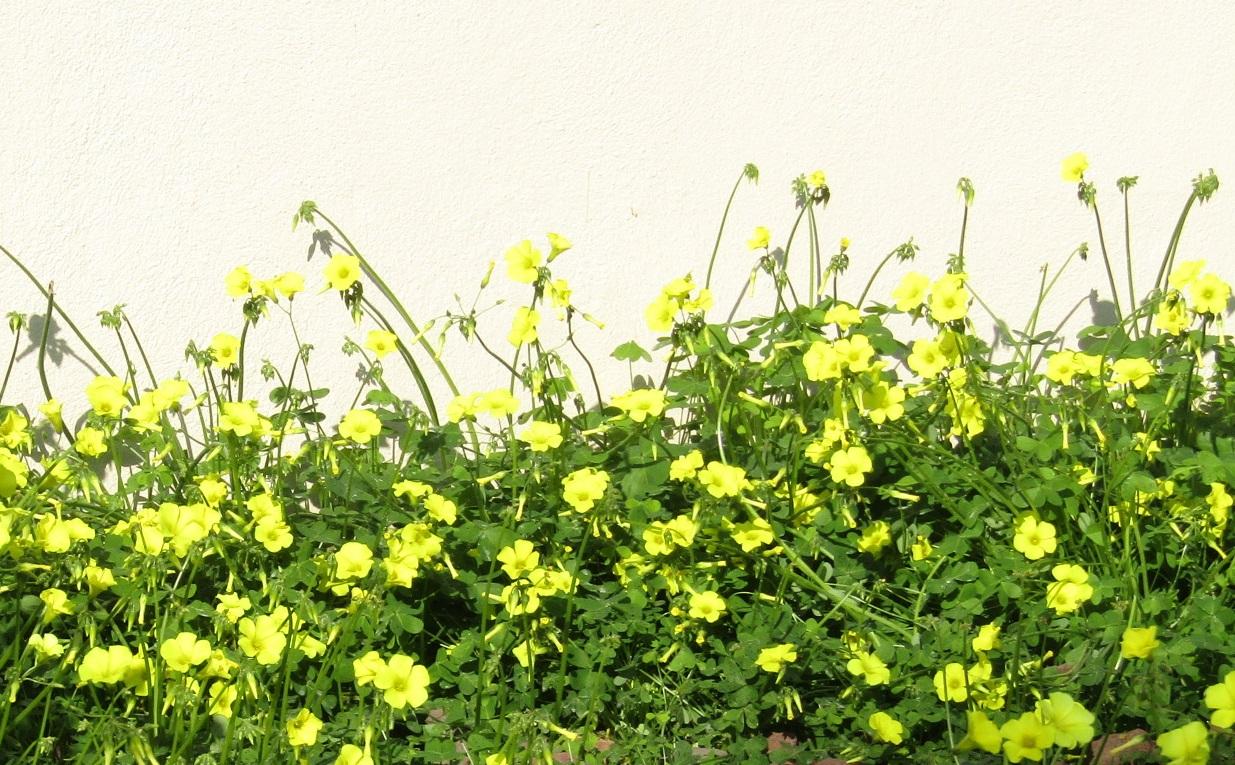 春よ ( C\'est le printemps ) !_b0287748_028915.jpg