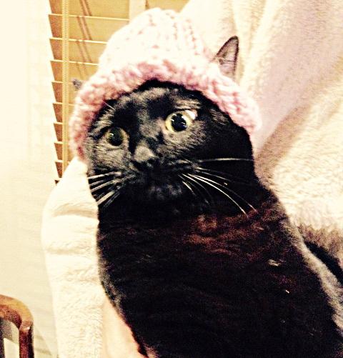 猫ちゃん用の「耳出しニット帽」をオーダー♪_b0051666_11434238.jpg