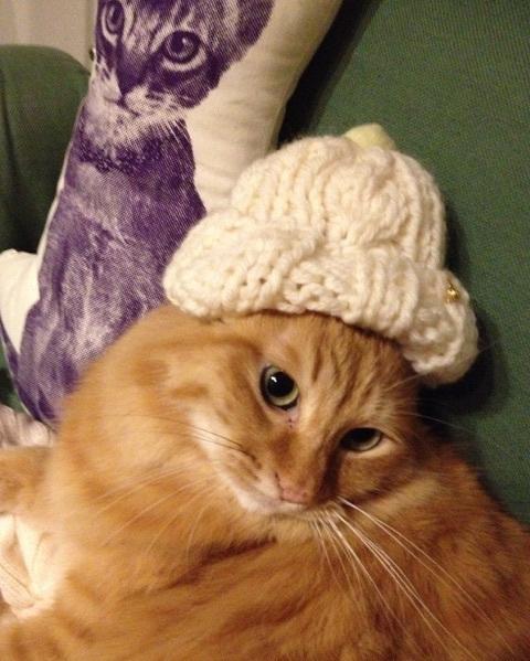 猫ちゃん用の「耳出しニット帽」をオーダー♪_b0051666_11434318.jpg