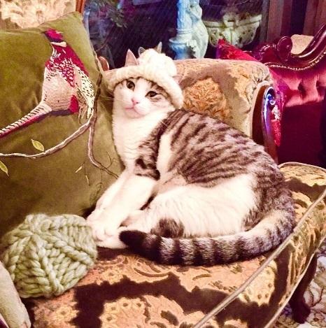 猫ちゃん用の「耳出しニット帽」をオーダー♪_b0051666_12375617.jpg