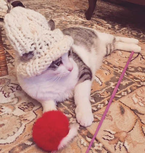 猫ちゃん用の「耳出しニット帽」をオーダー♪_b0051666_12465718.jpg