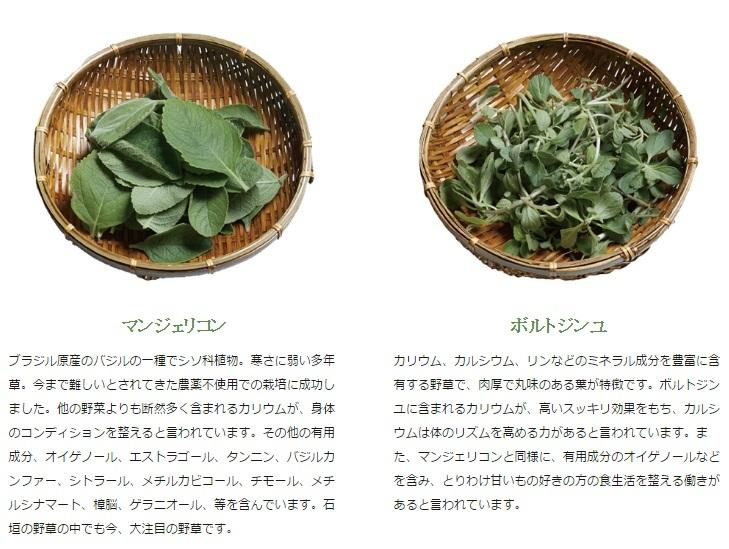 マンジェリコンとボルトジンユ♪のお茶「石垣島富茶」_b0051666_13361470.jpg