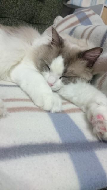 可愛い寝顔&運び屋ノアちゃん_a0285571_22201119.jpg