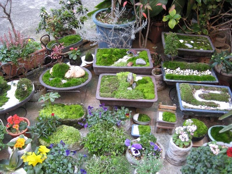 盆栽それとも箱庭?_b0057679_08543440.jpg