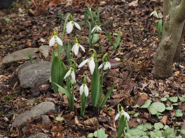 春の気配_e0232798_08135432.jpg